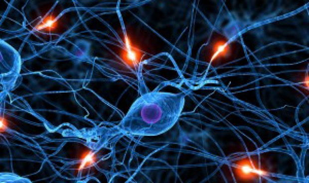 Una investigación española muestra que generamos neuronas hasta los 90 años.
