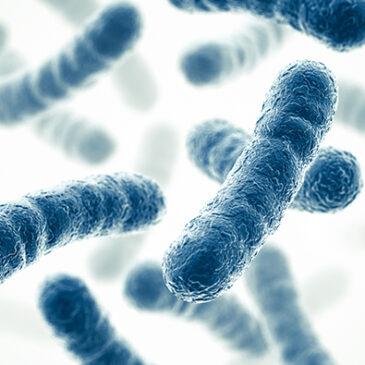 Porqué es importante la dieta de probióticos en personas con Autismo